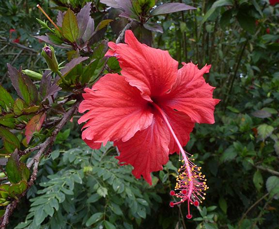 red-flower2