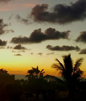 Moody Black Clouds Palm Trees Sunset Photo